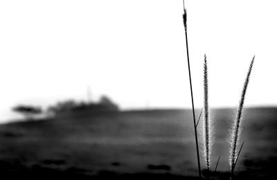 Solitude-BW