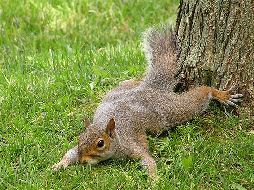 A squirrel. This one, like ours, is very much alive.