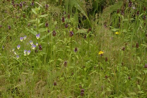 mijn hooilandje - my hay meadow