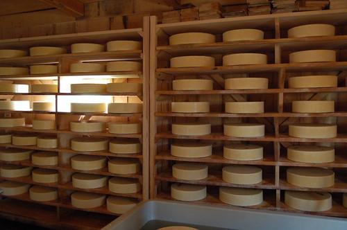 今年作られたチーズが並んでいる