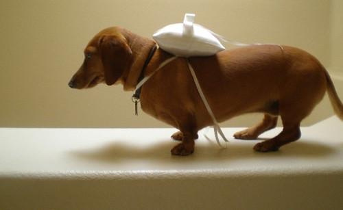 dogpillow