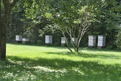 bee boxes