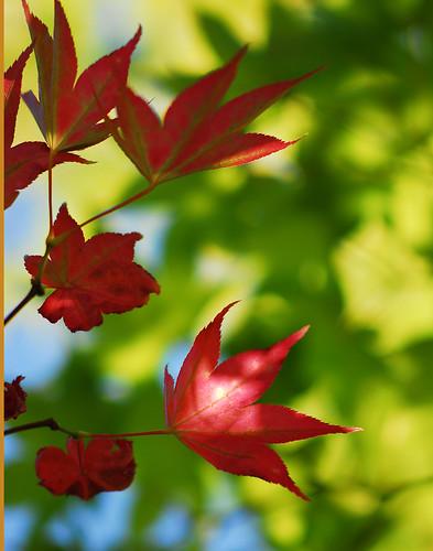 Autumn Emergence, 2008