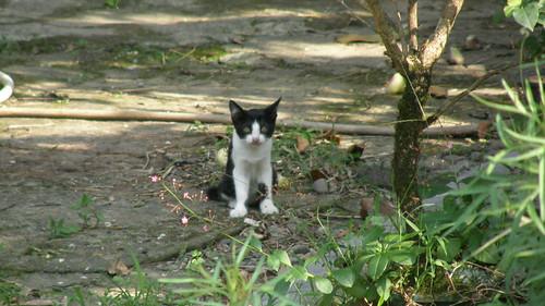 97.小貓咪躲遠遠的