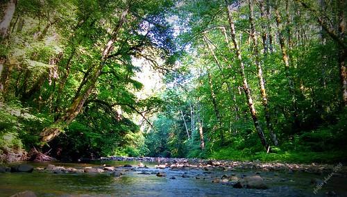 Humbug Creek