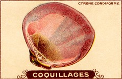 coquillages12