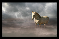 Lost In The Mist (DDA / Deljen Digital Art) Tags: uk england horse cloud mist nature misty fog mystery photoshop dark lost spirit deep atmosphere whiskey northumberland creation blended mysterious imagination layers lonely spiritual imaginary mythology myth mystic whitehorse mystique obscurity
