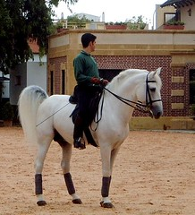Andalusian Horse (J McLaughlin) Tags: spain riding epona jerez andalusianhorses royalandalusianschoolofequestrianart eponatrip