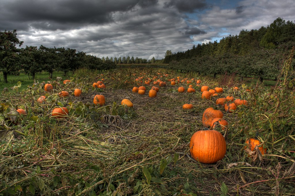 2921133266 f5ed8e43a4 b Photo Essay: Incredible Pictures of Pumpkin Patches
