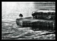 Ente (arctis) Tags: blackandwhite bw white black art nature by outdoors swiss bn sw 2008 08 bwemotions bwdreams passionphotography abigfave artlibre aplusphoto arctis blackwhiteaward canoneos40d bwartaward naturesfeinest byarctis
