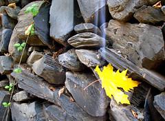 (anis k) Tags: autumn light yellow iran   azghad khorsan    upcoming:event=1178837
