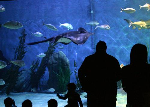 aquarium :: silhouette