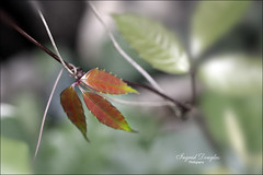 Rhythm of the Seasons (Ingrid Douglas Images - ART in Photography) Tags: seasons australia foliage cairns tropicalnorthqueensland australianflora greenfoliage instantfave bokehlicious canoneos40d perfectoarts canon100mmmacrof28lens ingriddouglas ingriddouglasphotography leavesandpatterns