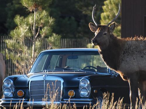 elk and mercedes