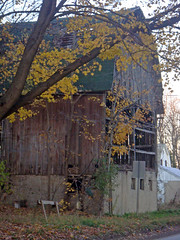 Snell Road Barn (Larry the Biker) Tags: november autumn fall leaves barn maple michigan farm farming foliage ag agriculture oaklandtownship snellroad
