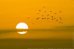 Freedom (Ammar Alothman) Tags: sky sun 3 nature birds silhouette sunrise canon landscape eos photo flickr photos mark 1d kuwait 2008 ammar kuwaitcity kw q8 mark3   vwc canon400mmf56l alothman ammaralothman 3mmar  canonef400mmf56lusm kuwaitpictures  canon400mm kuwaitiphotographer kuwaitphoto kuwaitphotos ammarphotos ammarq8 ammarphoto eos1dmarkiii 1dmarkiii eos1dmark3 ammarphotography kuwaitpic kuwaitpictrue whereiskuwait canon1dmarkiii canonmarkiii canon1dmark3 kvwc canonmark3 kuwaitvoluntaryworkcenter  kuwaitvwc ammarq8com  ammarphotocom