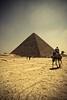 Egyptian Rules (Khaled A.K) Tags: photography pyramid egypt cairo camel khaled giza aplusphoto kashkari