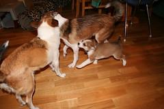 Rosa, Lina og Benoni