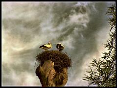 Cigeas en el Zoo (Doenjo) Tags: espaa geotagged zoo animales hdr jerez colaborador doenjo retofs1 lmdd