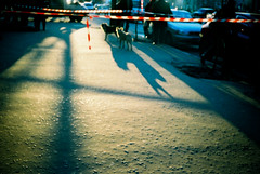 belomo000015 (mariczka) Tags: street sunset film dogs analog geotagged outside lomo lomography shadows candid kharkiv belomo elikon4 vintageanalogue
