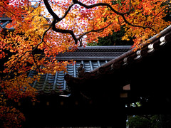 sunshade (Sinnyodou temple, Kyoto) (Marser) Tags: japan temple kyoto raw  lightroom  dmclx3