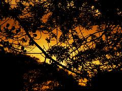 naranjo en flor (flor_fontanella) Tags: city trees sunset orange black sol leaves landscape hojas atardecer buenosaires arboles negro ciudad paisaje 1001nights naranja ramas arboleda colourartaward