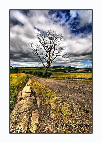 Fine Nature Scene - Tayside - Scotland