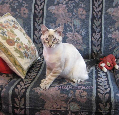 Sweet Olivia Cat