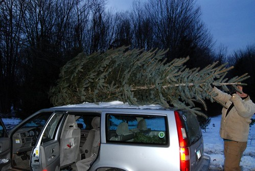 Bringing Home The Tree