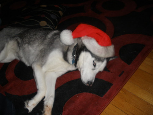 Tired Santa Puppy