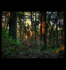 anisotropic_diffusion_forest (ecstaticist) Tags: trees light canada nature leaves forest canon bc darkness victoria hike mount filter diffusion douglas bushes hdr anisotropic photomatix g10 infinestyle forext tomepapping