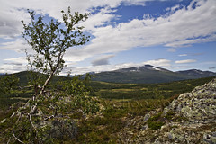 Mountain Landscape Near Oppdal, Norway (trondjs) Tags: summer mountain mountains tree norway canon landscape geotagged landscapes norge rocks europe raw sigma 5d nordic birch scandinavia srtrndelag 2009 betula oppdal mountainlandscape northerneurope whitebirch trndelag 2460 thewhitebirch eos5d sigma2460 2460mm europeanwhitebirch trondjs fjellbjrk midtnorge downybirch sigma2460mm128exdg 2460mm128exdg betulapubescensvartortuosa 6266695418 623958n 93231e sigma50th