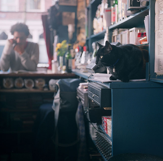 Cats in Bars
