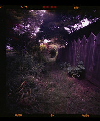 the path.... (bunchadogs & susan) Tags: zeroimagepinhole agfacolorportrait160