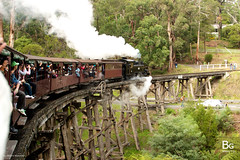 Crossing Wooden Trestle Bridge :: Puffing Billy, Melbourne (hk_bellchan) Tags: bridge train 1971 wooden australia steam billy locomotive  puffing       australia2008