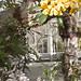 BOTANIC GARDENS - GLASNEVIN, DUBLIN