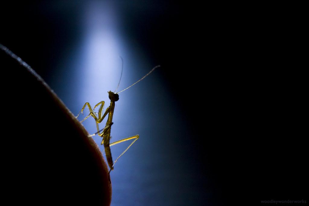 happy birthday, baby mantis (hello, cruel world)