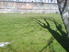 spring in frankfurt-2 (Tini_in_Rhein-Main) Tags: shadow tree green spring frankfurt wiese schatten baum gruen frhling fruehling