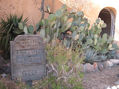 Cacti & Religion Juxtaposition
