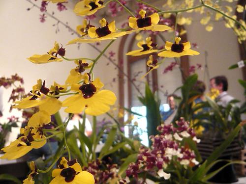 Orquídeas en Buenos Aires.