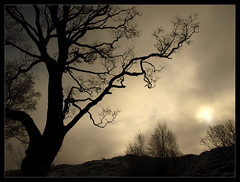 You Are Nothing in This Place (jamalrob) Tags: trees mist silhouette scotland highlands tyndrum dalrigh