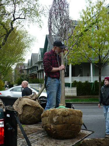 DPW Tree Planting