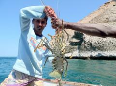 Socotra by dianadrz