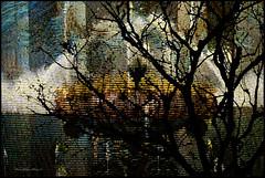 Moonlight Sonata (ArteZoe) Tags: texture photoshop treesilhouette montage impressionism blueribbonwinner artezoe awardtree fountainatlongwood anichinitapestry