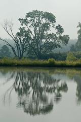 Divided (Jim Sneddon) Tags: trees vacation lake reflection tree green water grass d50 jack illinois pond cabin nikon jim ripples shawnee 70300 isawyoufirst goreville back2basics panthersden nikkor70300mmf45f56glens