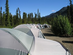 All our tents lined up in a row.