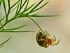 End of the road? (algo) Tags: macro closeup garden photography spider interestingness topf50 bravo shots topv444 explore algo fennel hairylegs outstanding 50f outstandingshots specnature outstandingshot explore249 macromarvels