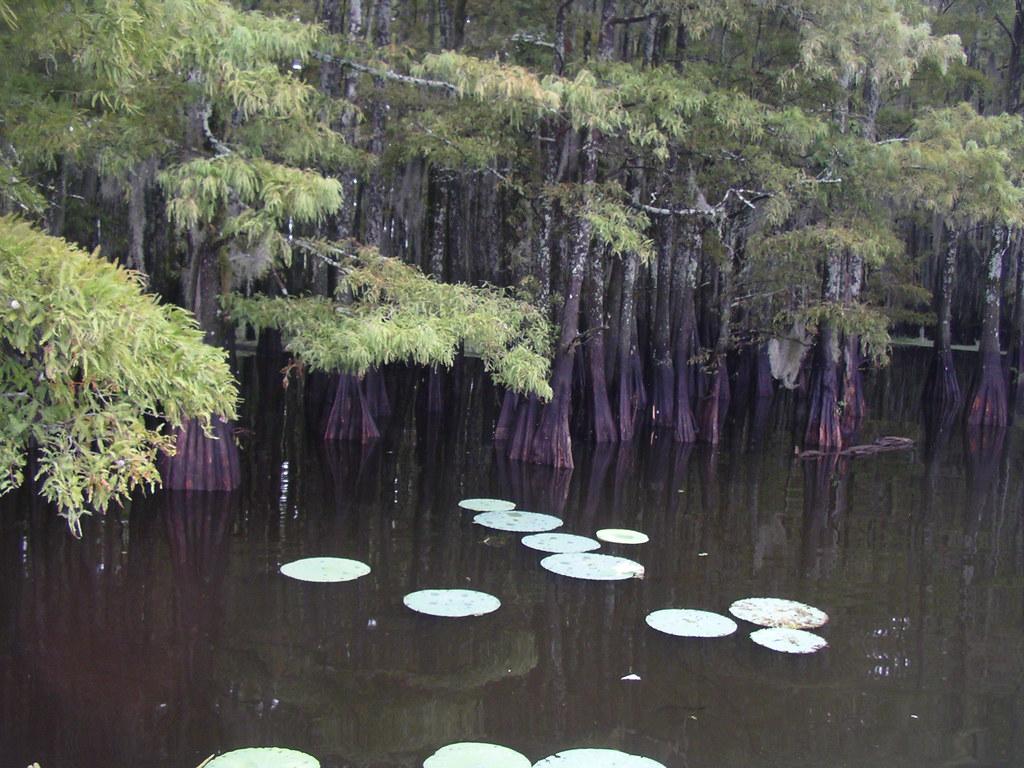 mckinney fly angling fly fishing caddo lake