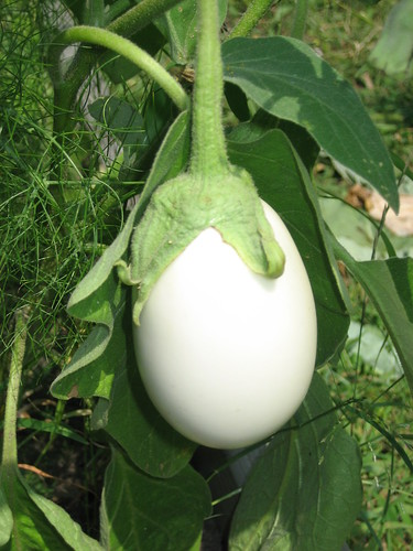 the perfect white eggplant