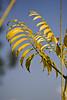 Folhas (Marcelo Cerri Rodini) Tags: claro brazil verde rio azul brasil leaf wind sãopaulo folha marcelo vento rioclaro rodini cerri img7690 mrodini marcelorodini marcelocrodini marcelocerrirodini paístropical marcelocerri